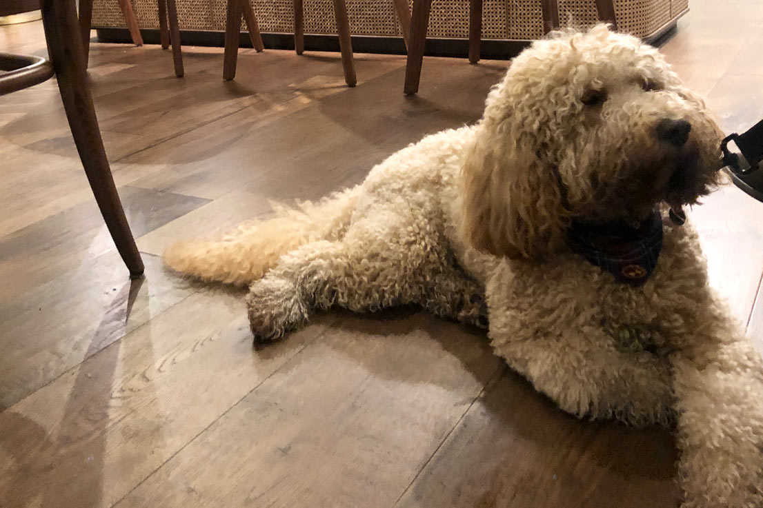 Dog friendly places to stay in The Roseate Villa bath